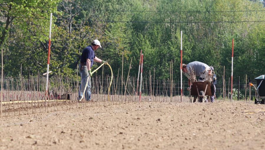 plantation pépinières d'Enghien