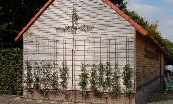 Gaasbeek pignon fruitier