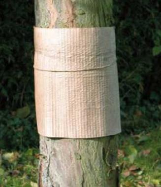 bande piège sur l'arbre